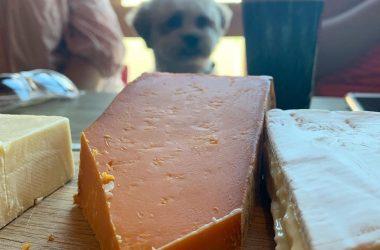 Cheese Sunday 1