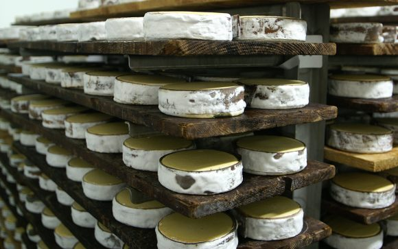 Vacherin Mont d'Or Cheese maturing